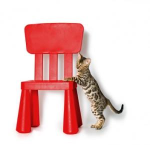 Bengalkatze auf rotem Stuhl
